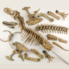 Набор EDU-TOYS VT026 Скелет динозавра 91см